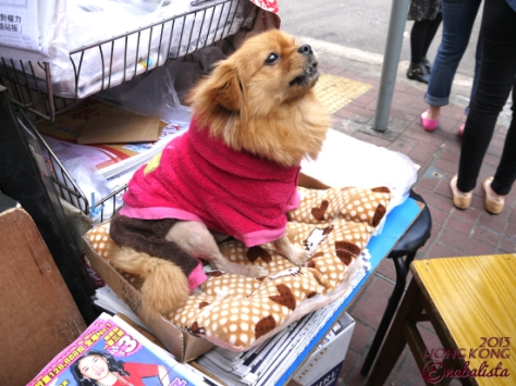 Ena HK2 12 Puppy