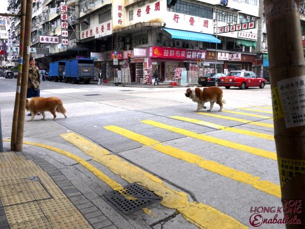 Ena HK2 16 Dog