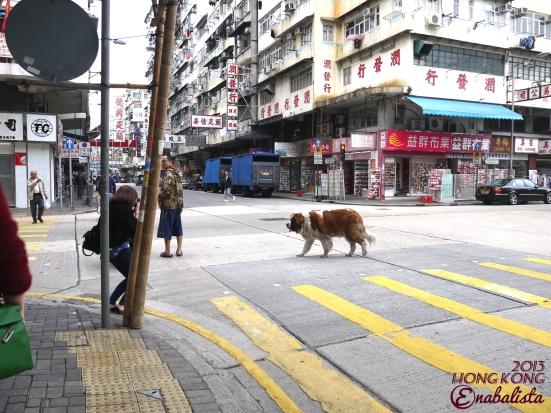 Ena HK2 16 Dog2