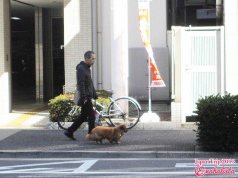 Ena Japan 2013 14